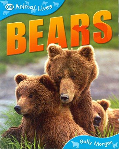 - Bears (QEB Animal Lives)