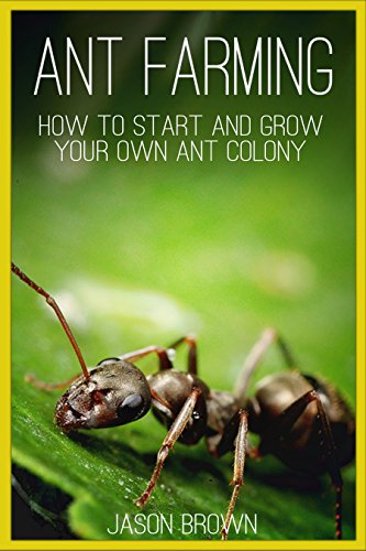 Ant Farming: How to Start and Grow Your Own Ant Colony