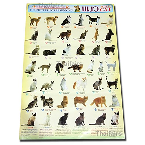 CATS OF THE WORLD POSTERS ULTIMATE BREEDS CAT POSTER MORE THAN 40 BREED SPECIES (Cat Breed Chart)