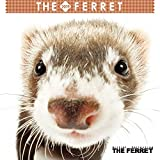 JAPAN IMPORT :: THE FERRET mini calendar 2019 calendar CL-1157