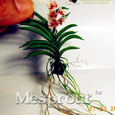 AGROBITS Cattleya Hybrida Flower Bonsai 100PCS Famous Flowers Mini Orchids Bonsai Potted Office Plant Beautiful Flowers: ()