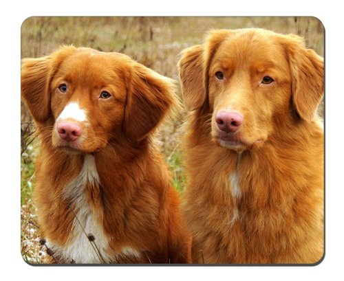 Price comparison product image Dog Nova Scotia Duck Tolling Retriever Mousepad, Gaming Mouse Pad (10.2x8.2 inches)