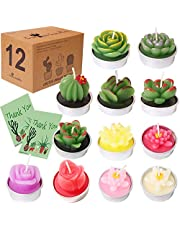 AIXIANG Succulent Candles Cactus Candle Tealight Cactus Candles for Home Decorative Cactus Candles Tea Light Candles Home Decor Gift, Baby Shower Gifts for Guests Candles (12 Pcs in Box)