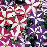 Outsidepride Petunia Multiflora Star - 5000 Seeds