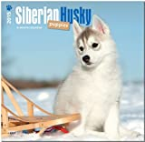 Siberian Husky Puppies 2015 Square 12x12 (Multilingual Edition)