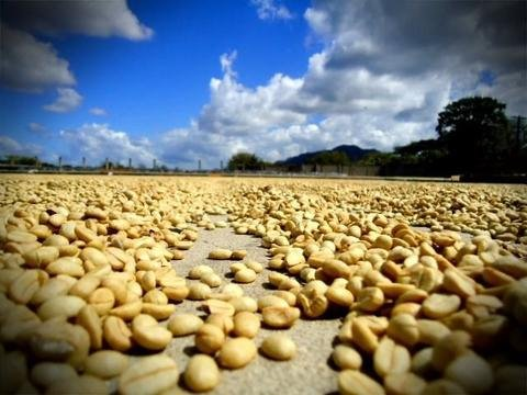 5 LBS Mexico Organic Jaltenango Unroasted Green Coffee Beans
