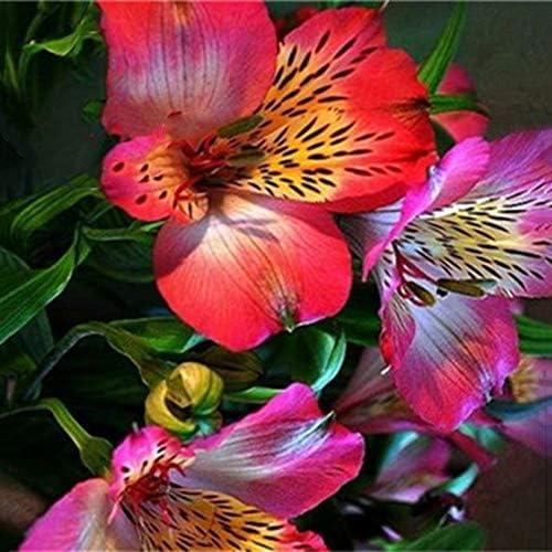 TENGGO Egrow 100PCS/Pack Lily Semillas Raro Peruano Lily Alstroemeria Bonsai Plants Mix-Color Beautiful Lilies Flower para Decoración de Hogar y Jardín - 3