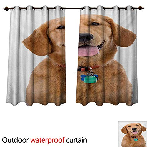- WilliamsDecor Golden Retriever Outdoor Curtains for Patio Sheer Portrait of Young Pedigreed Dog Wearing a Collar and Tags Domestic Animal W84 x L72(214cm x 183cm)