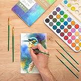 Norberg & Linden Watercolor Paint Set - 36 Premium