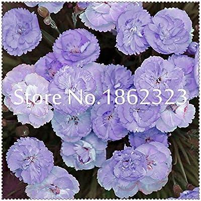 sump New 200 pcs Dianthus Caryophyllus Flowers Seeds for Beautiful Gardening Dark Blue
