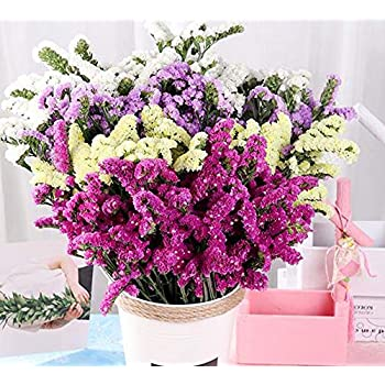 TooGet Natural Dried Flowers Forget Me Not Bouquet Myosotis Sylvatica Bundles, Real Freshly Harvested Dry Flower Bunch Arrangements Decorate for Home, Party, Wedding, Store (Mixed Color)