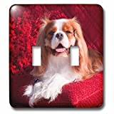 3dRose Danita Delimont - Dogs - Regal Cavalier rests on a red pillow, MR - Light Switch Covers - double toggle switch (lsp_258256_2)