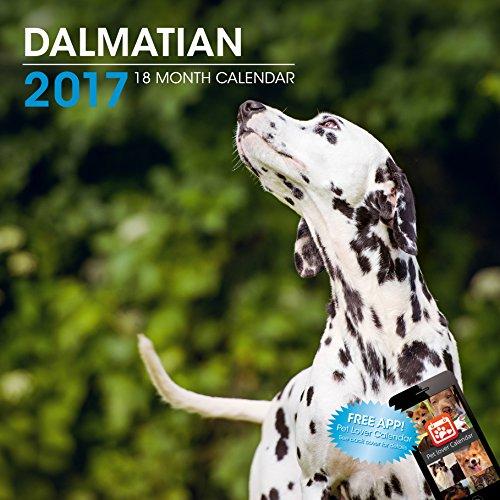 LittleGifts Dalmatian 2017 Calendar (3052)