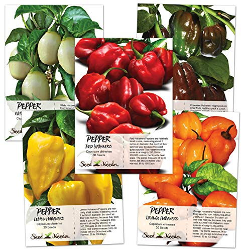 Seed Needs, Habanero Seed Collection (5 Individual Packets) Non-GMO (Hot Chili Pepper Seeds)