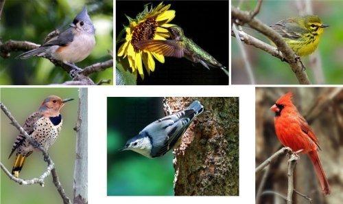 Hi-Look Inc. HL24070B Steve Gifford Eastern Songbirds (Assorted) Microfiber Cloths by Hi-Look Inc.