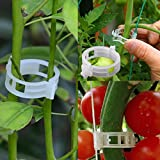 Plant Support Clips for Vine Vegetables Tomato to Grow Upright and Makes Plants Healthier