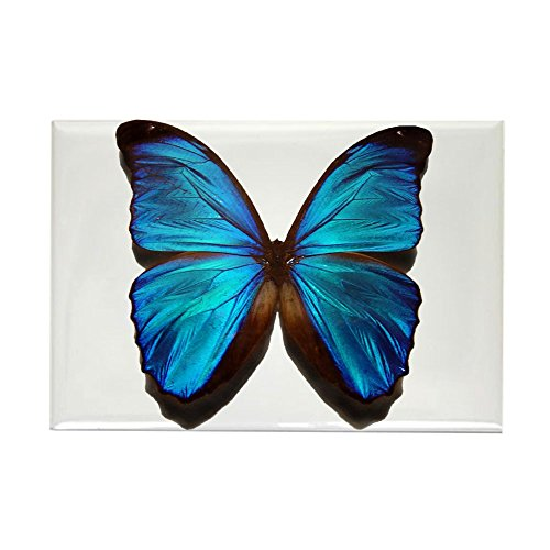 CafePress Blue Butterfly Two Rectangle Magnet, 2