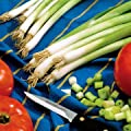 Park Seed Parade Green Onion Seeds