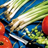 Park Seed Parade Green Onion Seeds, Includes 1000 Seeds in a Pack