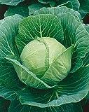 chicken and cabbage - David's Garden Seeds Cabbage Golden Acre SL9921 (Green) 200 Heirloom Seeds