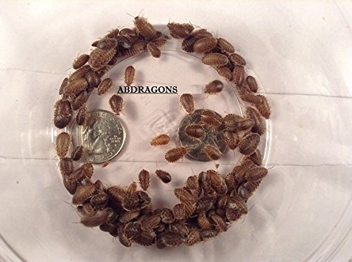 dubia-roaches-200-small
