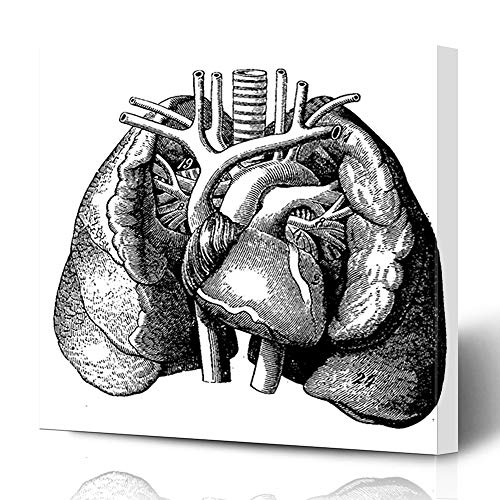 Ahawoso Canvas Prints Wall Art 16x16 Inches Etching Anatomy Heart Middle Lungs Vintage Engraved Old Human Ancient History Antique Design Atrium Decor for Living Room Office Bedroom