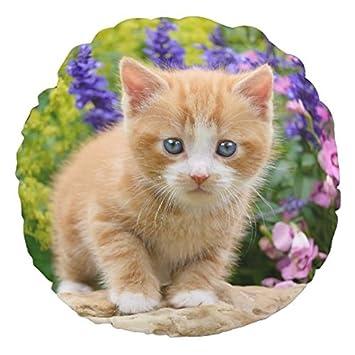 Amazon.com: Bonito gato jengibre de flores jardín suave ...