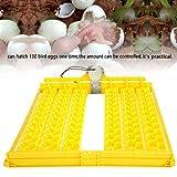 Caredy Egg Trays, Egg Incubation Tray, 132Pcs