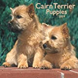 Cairn Terrier Puppies 2009 Square Wall Calendar
