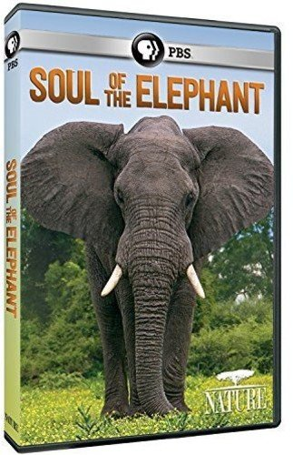 Nature: Soul of the Elephant - Show Dvd Elephant