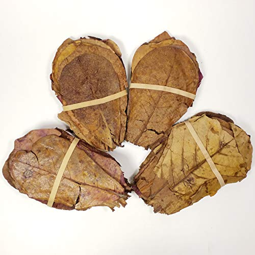 "4""-5"" Indian Almond Leaves for Freshwater Shrimp, Bettas, Tropical Fish Aquariums & Terrariums - 100 Count"