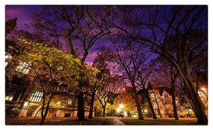 Estados Unidos parques Chicago ciudad noche árboles Illinois ...