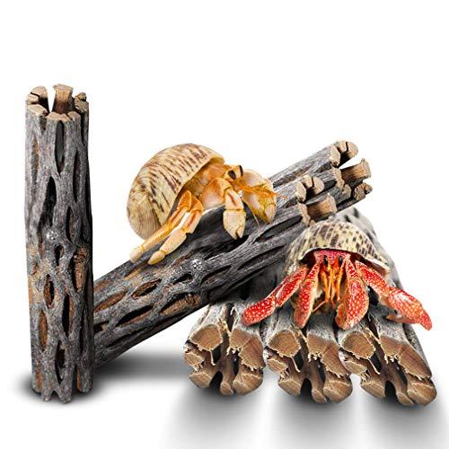 6 Hermit Crab Woods - 6
