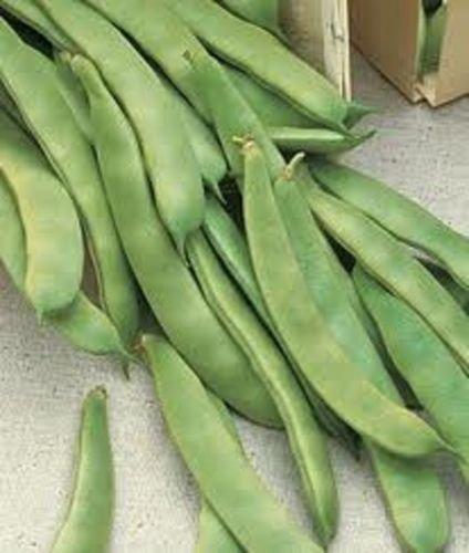 Romano Bean Seeds - Original Italian Prolific Green Romano Flat Pole Bean Seeds