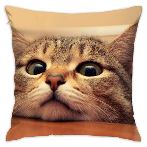 - Asefcnxkjii Curious Kitty Cat Throw Pillow Case Square Decorative Cushion Case Cover for Couch Decor 18