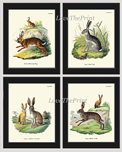 Bunny Rabbit Art Print SET of 4 Beautiful Antique Rabbits Animal Pet Nature Natural Science Illustration Room Wall Home Interior Decor to Frame Unframed - Antique Rabbit