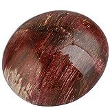 rockcloud Irregular Polished Petrified Wood Palm