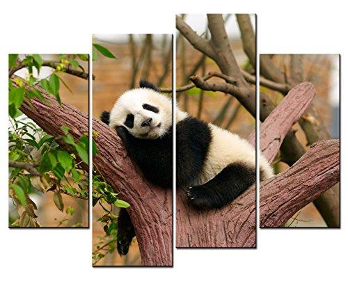 panda pictures - 7