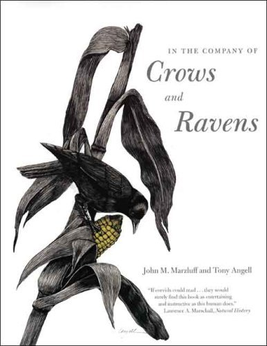 In the Company of Crows and Ravens By John M. Marzluff, Mr. Tony Angell