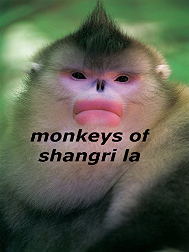 monkeys-of-shangri-la