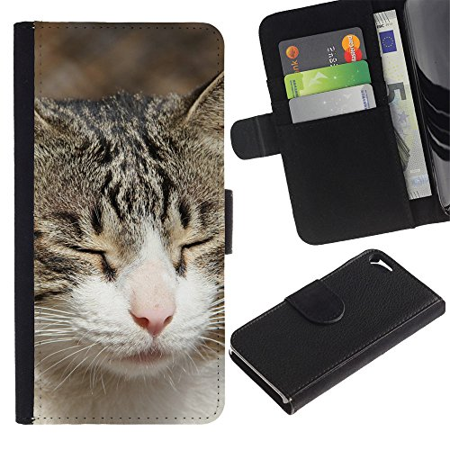 Be Good Phone Accessory // Flip Étui de Protection Cuir Portefeuille Housse Fente Carte Coque pour Apple Iphone 5 / 5S // American Shorthair British House Cat