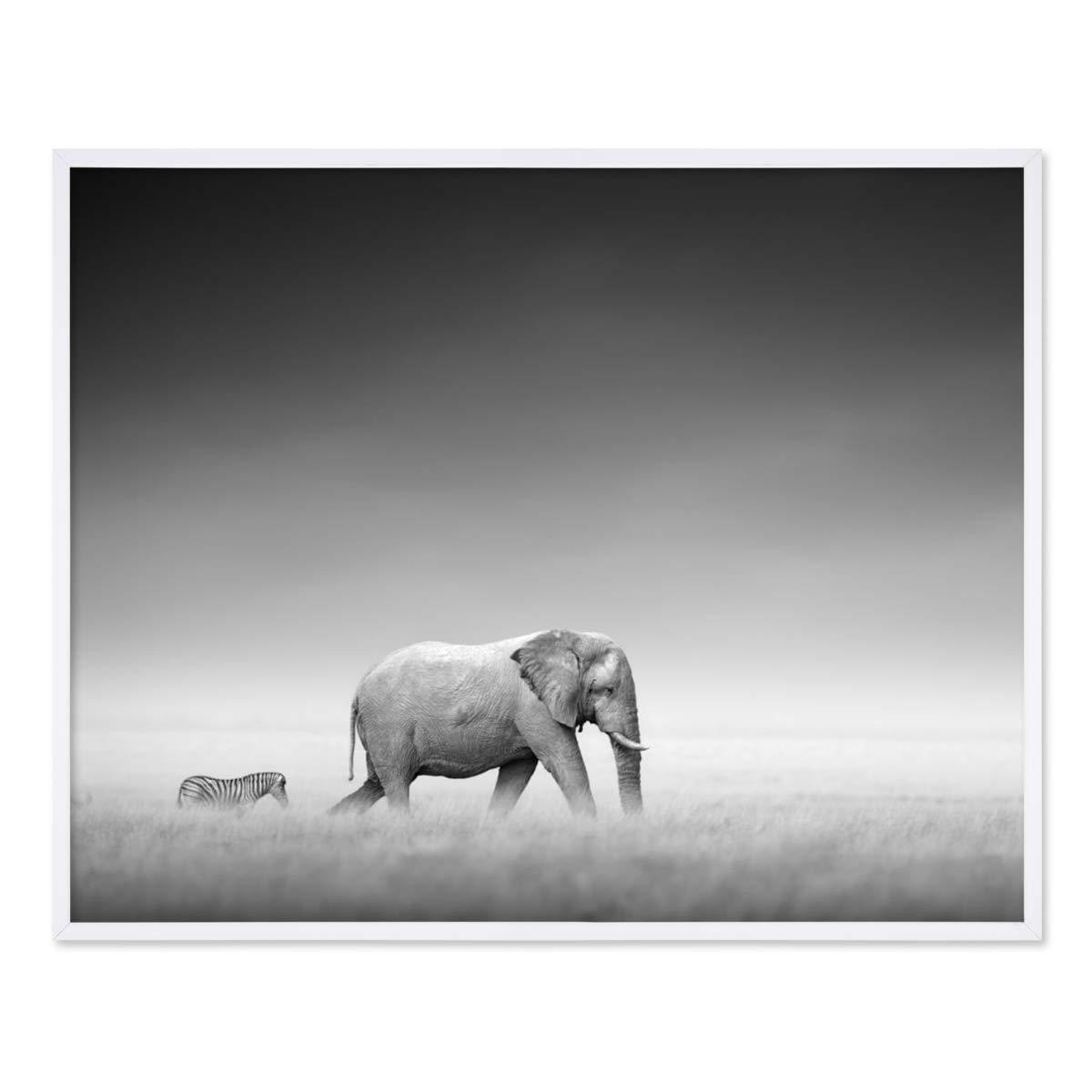 PHOTOLINI Poster mit Bilderrahmen Weiss \'Elefant\' 40x50 cm schwarz ...