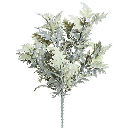 Vickerman FK170501 Dusty Miller Bush