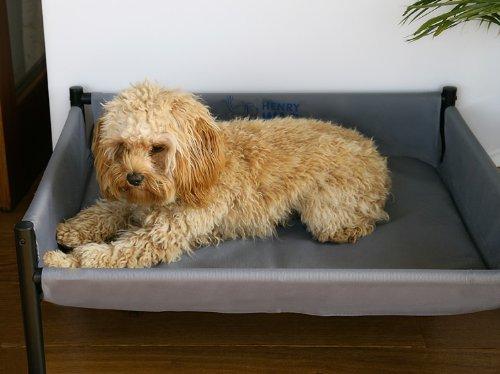Henry WAG Elevated perro cama (tamaño mediano - 70 x 55 x 30 cm): Amazon.es: Productos para mascotas
