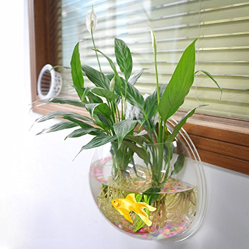 Amazon.com : New Arrival Wall-mounted Hanging Acrylic Fish Tank Aquarium Bubble Bowl Plant Pot Modern Home Decoration : Everything Else