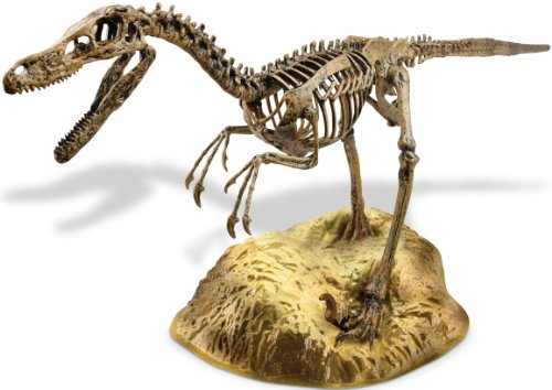 Edu-Toys  Velociraptor Skeleton Model Kit (Toys And Models compare prices)