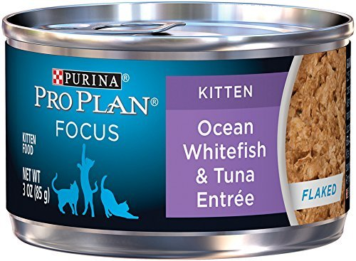 Purina Pro Plan Wet Cat Food, Focus, Kitten Ocean Whitefish and Tuna EntrÃÂe, 3-Ounce Can, Pack of 24 by Purina Pro Plan