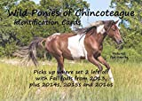 img - for Wild Ponies of Chincoteague Identification Cards: Set 3 book / textbook / text book