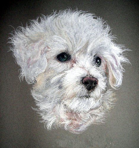 Bichon Frise Dog Portrait - Bichon Frise Dog Portrait Matted Art Print - 5 in x 7 in Design - 8 in x 10 in Matted