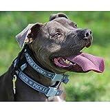 Cesar Millan Blue Dog Collar for Large Dogs, Pack